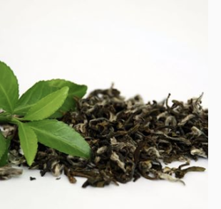 capsule thé vert menthe